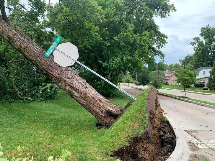 Koks nokrita un zālāju paņēma... Autors: The Diāna 15 reizes, kad Māte Daba mūs pārsteidza