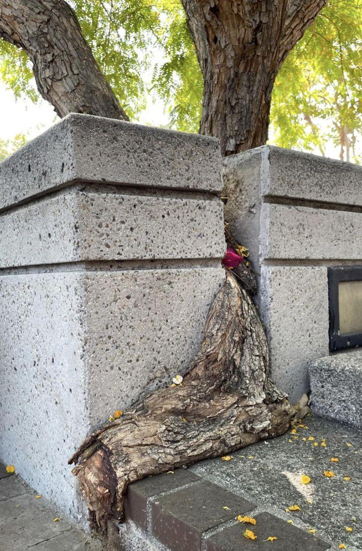 Koki ir apņēmīgi Piemēram... Autors: The Diāna 15 reizes, kad Māte Daba mūs pārsteidza