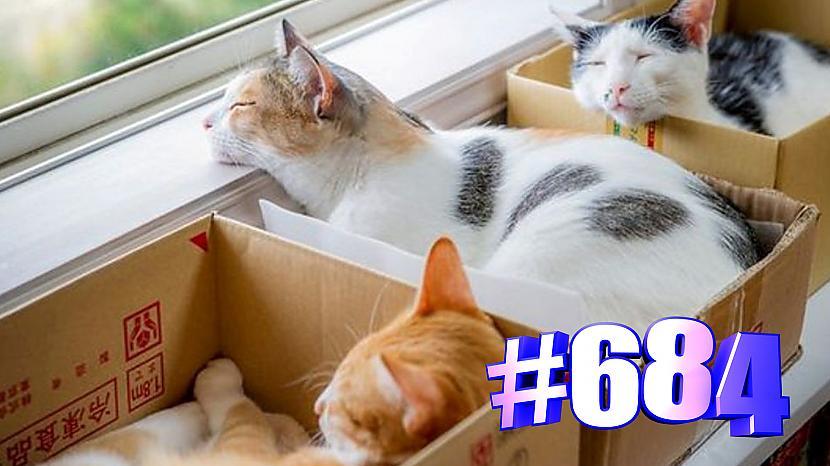 Autors: kotomaniabest Kaķi un kastes (3. daļa) 🐱😍💯😘