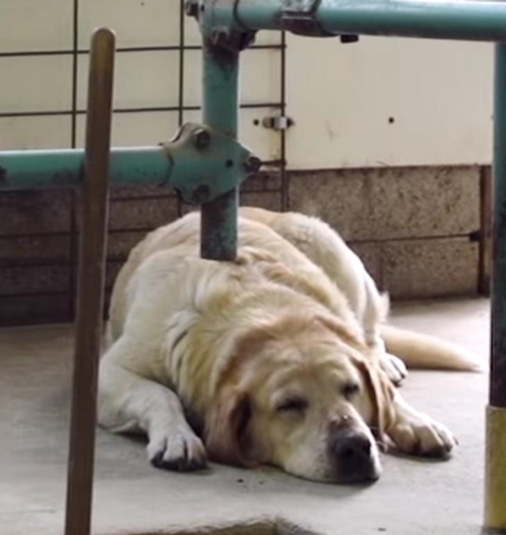 Nekas nevar patraucēt suņa... Autors: Lestets 23 optiskās ilūzijas, kas liks apšaubīt tavu paļaušanos uz redzi